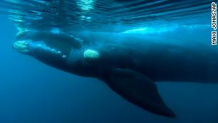 Pro-whaling nations block South Atlantic whale sanctuary