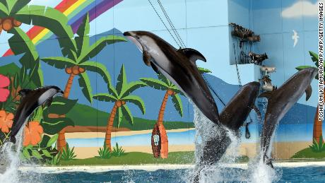 Pacific white-sided dolphins jump out of the water during a sea animal show at Hakkeijima Sea Paradise in Yokohama in this file photo.