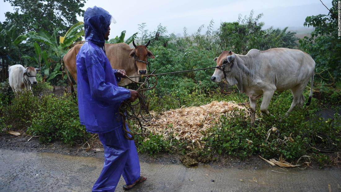 A farmer gathers his herd of cows to a safe place as Super Typhoon Mangkhut approaches the city of Tuguegarao, Cagayan province, north of Manila on September 14, 2018. - Preparations were in high gear in the Philippines on September 14 with Super Typhoon Mangkhut set to make a direct hit in less than 24 hours, packing winds up to 255 kilometres per hour and drenching rains. (Photo by TED ALJIBE / AFP)        (Photo credit should read TED ALJIBE/AFP/Getty Images) Ted Aljibe/AFP/Getty Images
