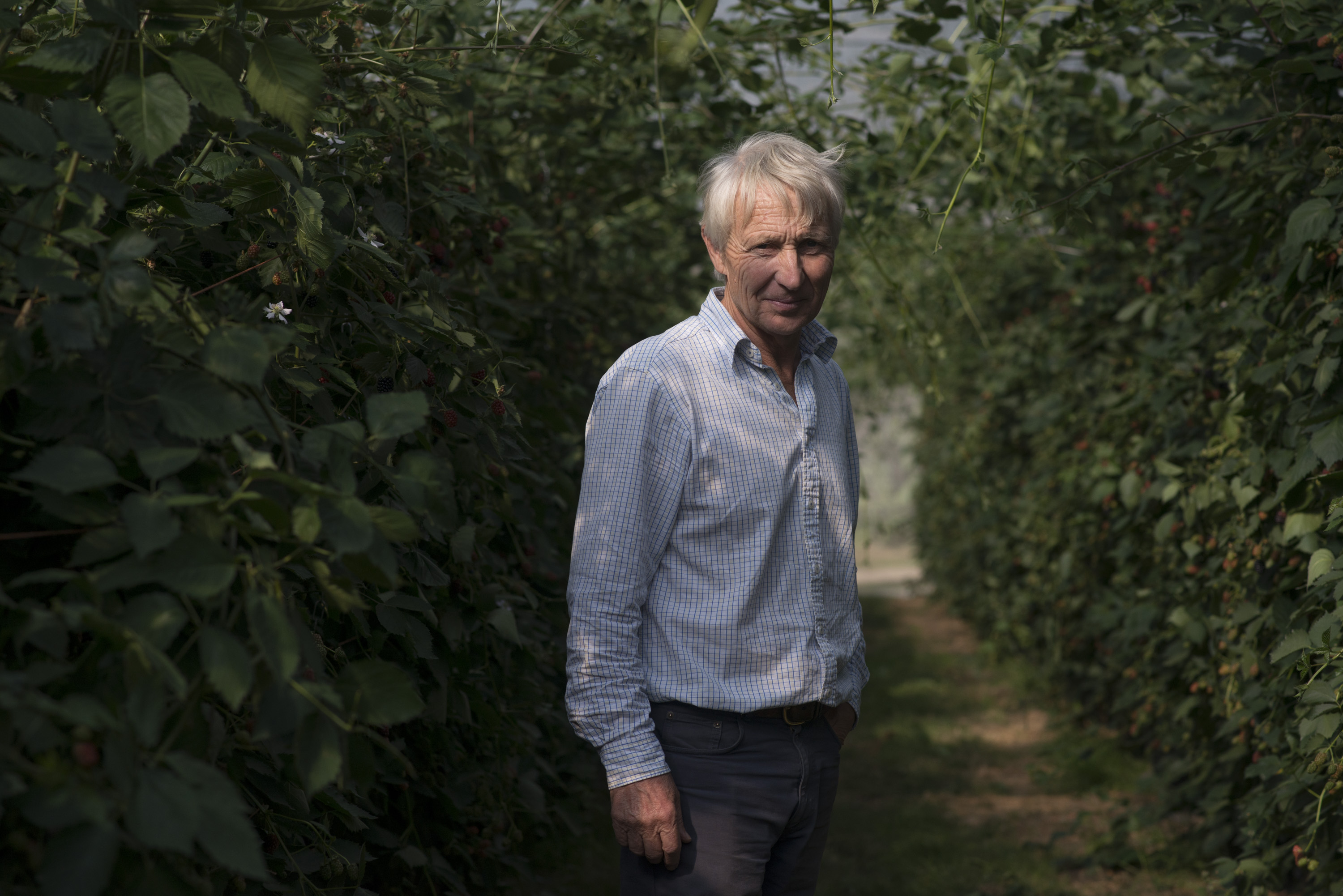 Fruit farmers feel squeeze as Brexit looms