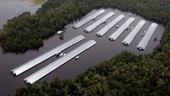 Chicken farm buildings are inundated with floodwaters near Trenton, North Carolina, on September 16.