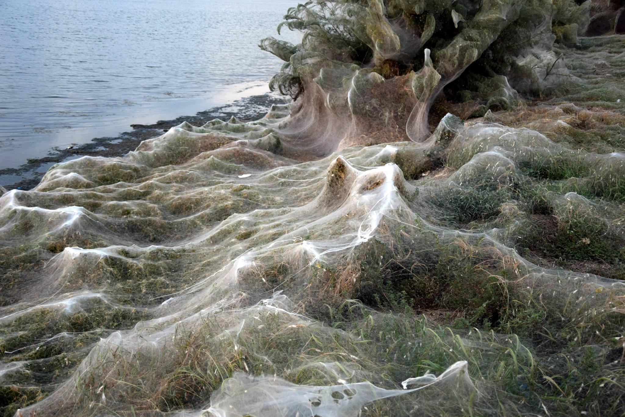 Αποτέλεσμα εικόνας για spiders in greece