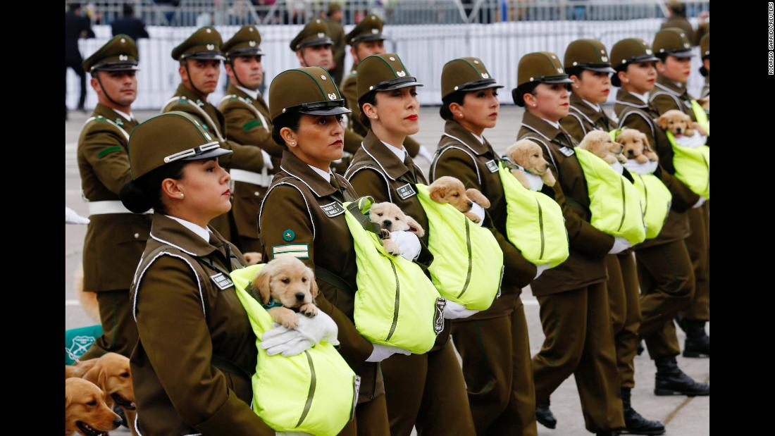 Police officers carry puppies as they march at a military parade in Santiago, Chile, on Wednesday, September 19. The puppies will be trained to be police dogs.