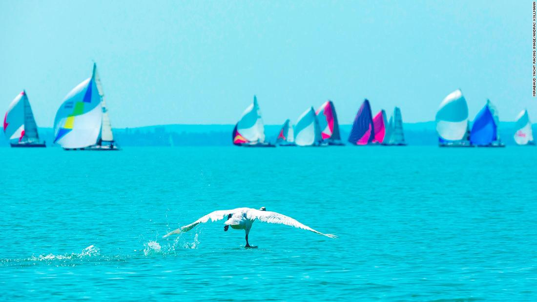 "Andras Kollmann captured a bird running across flat water towards sailing boats competing in the Kékszalag regatta on Lake Balaton, Hungary. ""Birds and sailors operate in the same way,"" says Kollman. ""They both trim lightweight streamlined structures to create lift."""