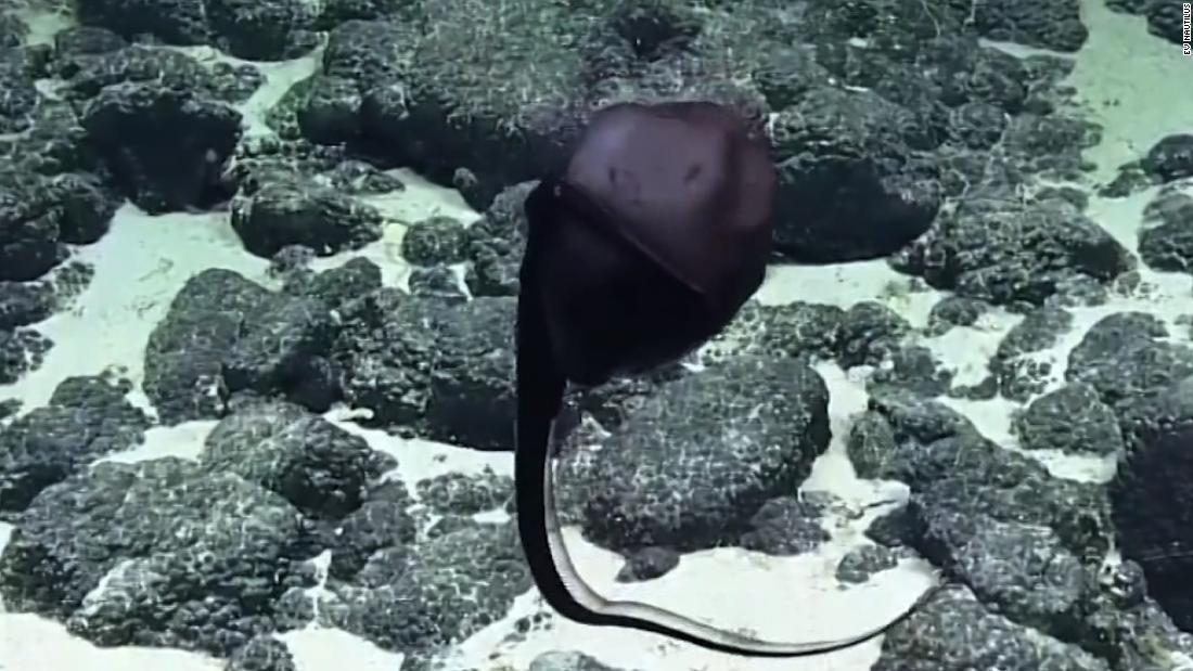 Watch eel change shape right before your eyes