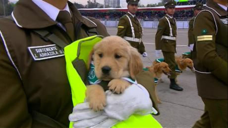 See Puppies Steal Show At Military Parade Cnn Video