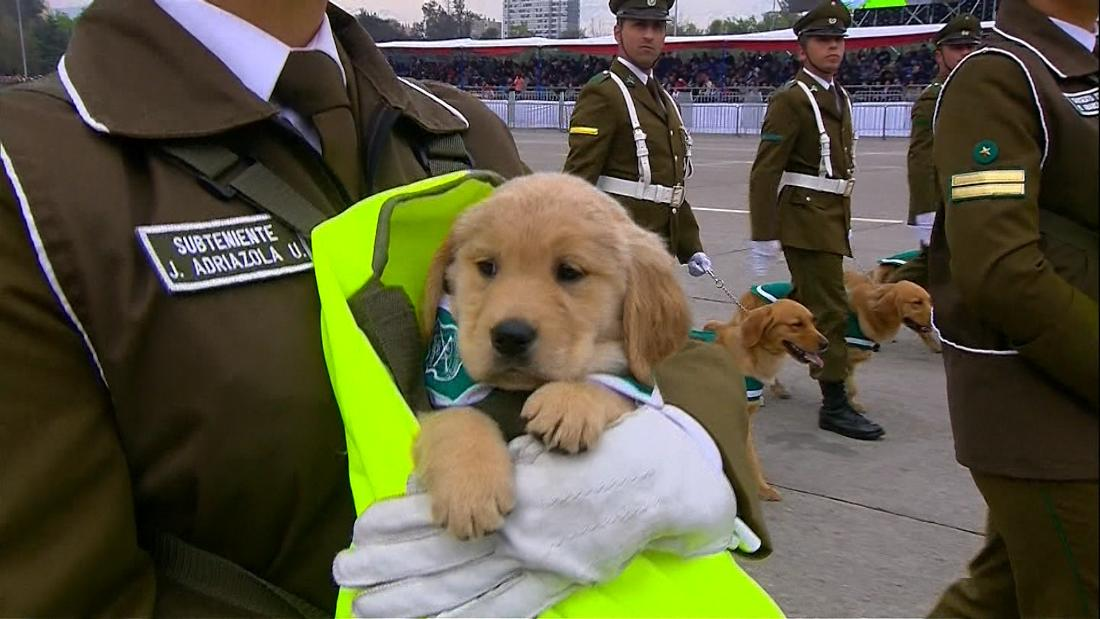 See puppies steal show at military parade