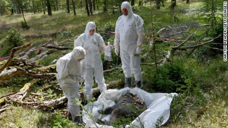 Veterinarians inspect a dead boar during an African swine fever outbreak exercise in Germany in June.