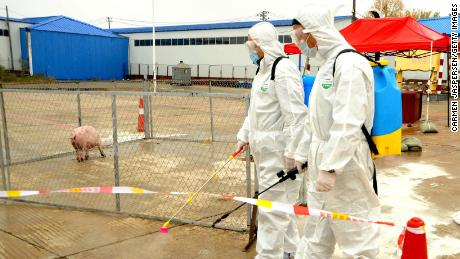 Medical staff participate in an exercise to prevent African swine fever.