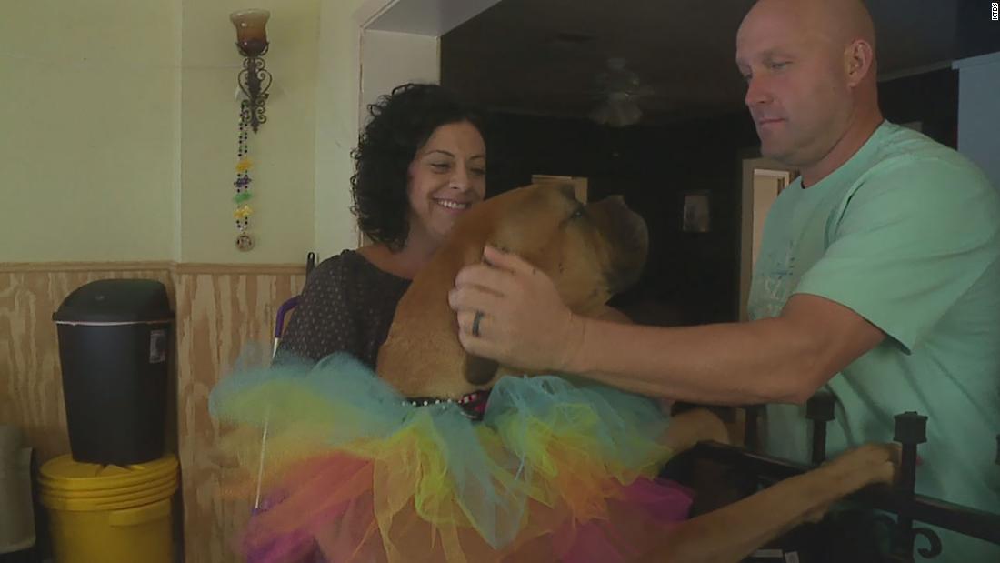 Community supports, celebrates dog that survived violent burglary