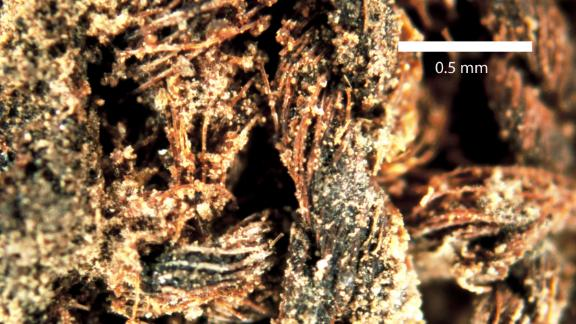 Close-up of linen fibers the Turin mummy was wrapped in for burial.