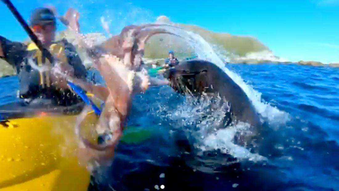 Seal attacks kayaker with octopus