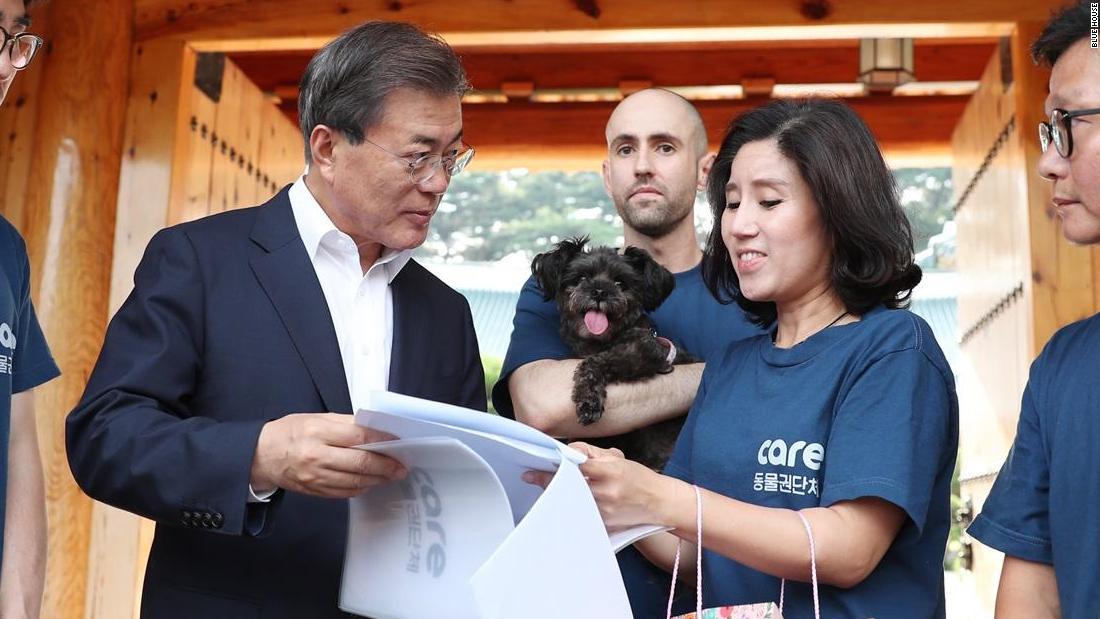 Head of South Korean dog charity 'secretly euthanized hundreds of animals'