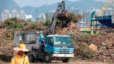 Thousands of felled trees have been brought to Kai Tak, the former airport that sits along Hong Kong's famed Victoria Harbor.
