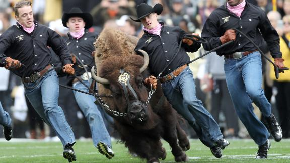 Ralphie the Buffalo is brought on the field before the Colorado Buffaloes play the Arizona State Sun Devils at Folsom Field on October 6, 2018 in Boulder, Colorado.