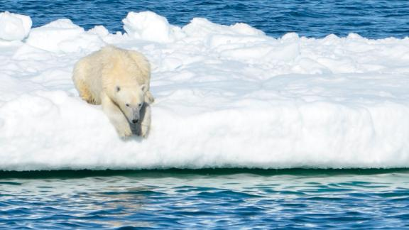 In this June 15, 2014 photo provided by the United States Geological Survey, a polar bear rests on a chunk of sea ice in the Arctic.
