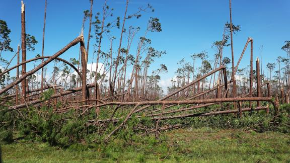 Trees snapped by Michael's winds are seen in Mexico Beach on October 11.