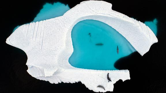 Category: Creative Visions. In the Antarctic, a drone captures a heart-shaped pool created by a melting iceberg.