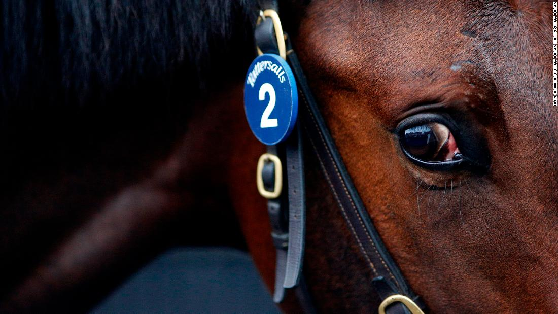 The equine superstars rivaling Federer and Messi