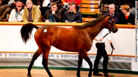 The sale where royalty and billionaires can spend $4.8M on a single horse