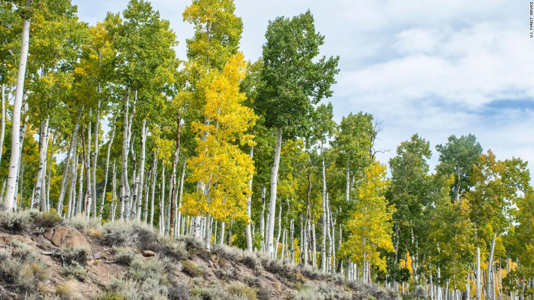 The world's largest organism is dying, but there are still ways to save it