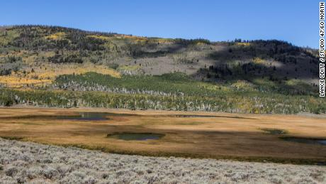 The Pando aspen clone lies more than 5,000 feet above sea level in central Utah.