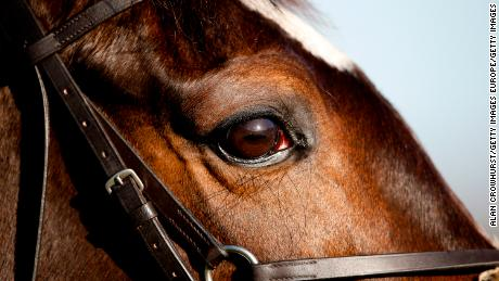 New research on horse eyesight could improve racecourse safety