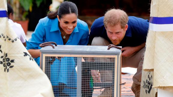 Harry and Meghan look at a parrot during a visit to Tupou College in Tonga on Friday, October 26.