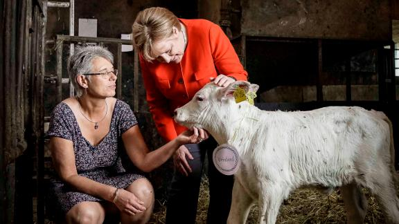 In this handout photo provided by the German Government Press Office in July 2018, Merkel meets a newborn calf during a visit to the Trede family dairy farm in Nienborstel, Germany.