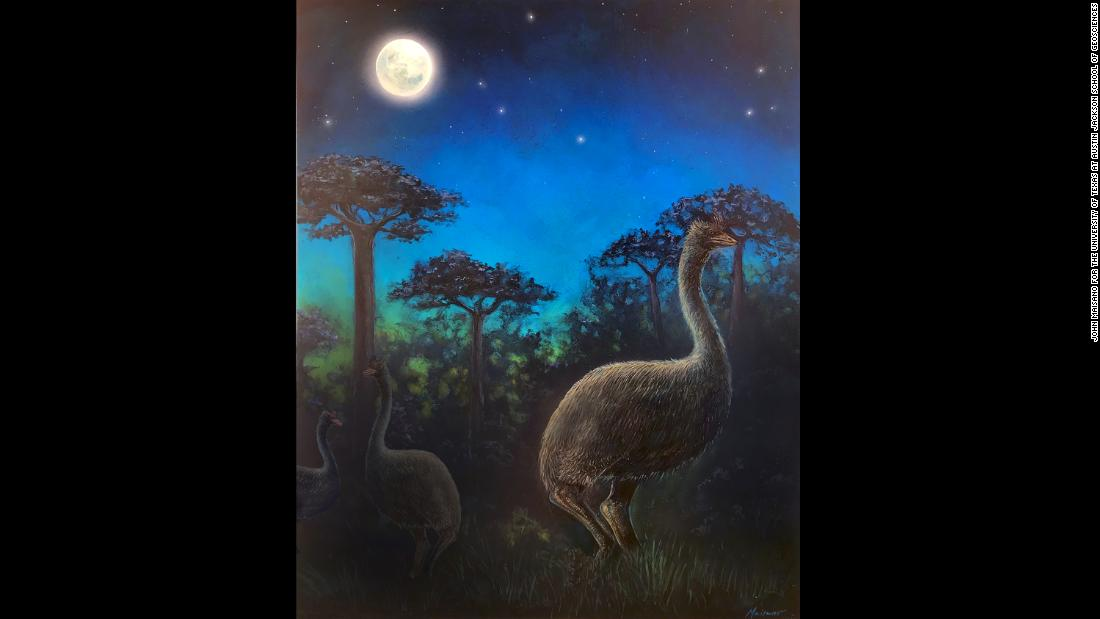An artist's illustration shows giant nocturnal elephant birds foraging in the ancient forests of Madagascar at night. A new study suggests that the now-extinct birds were nocturnal and blind.