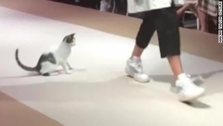 Stray cat steals the show on a fashion runway