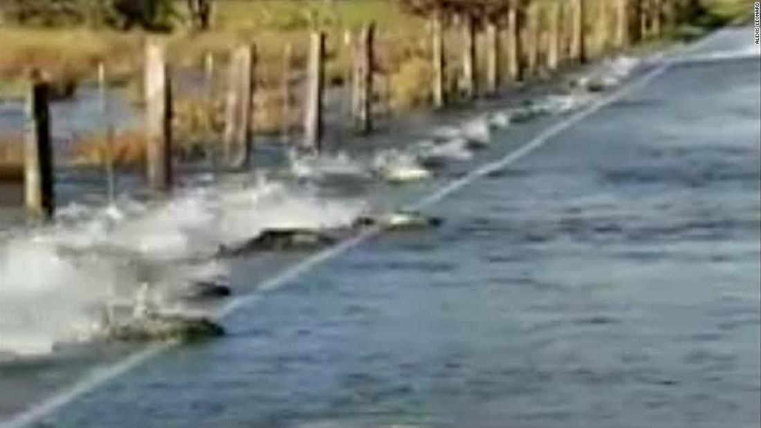 Video captures salmon swimming across a road in Washington ...