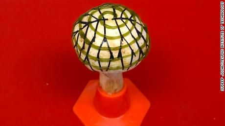 The mushroom is covered with clusters of cyanobacteria and an electrode network.