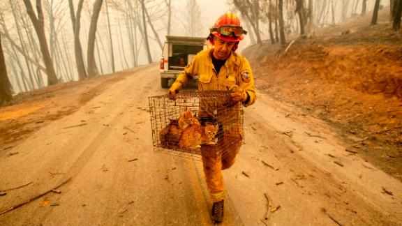 Fire Capt. Steve Millosovich, battling the Camp Fire in Big Bend, carries a cage of cats that fell from an evacuee