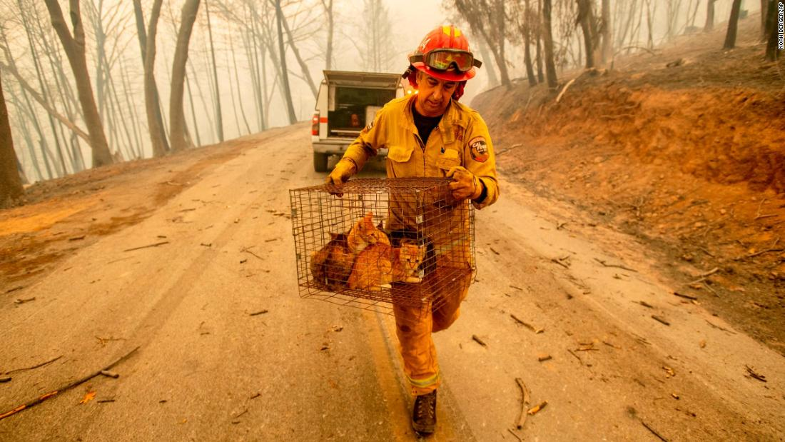 Fire Capt. Steve Millosovich carries a cage of cats that fell from an evacuee's pickup while he battles the Camp Fire in Big Bend on November 9.