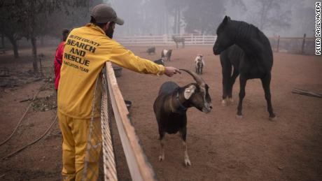 A Butte County Sheriff Search and Rescue crew rescue animals from the Camp Fire.