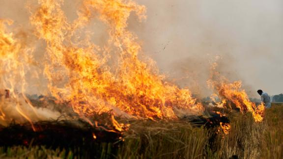 Crop burning is one of the biggest sources of pollution in northern India.