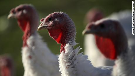 Deadly salmonella outbreak forces USDA to recall raw turkey
