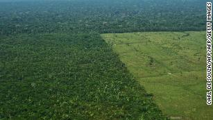 Global climate targets will be missed as deforestation rises, study says