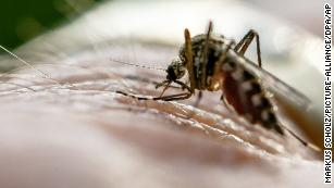 Malaria on the rise in more than 13 countries, experts warn