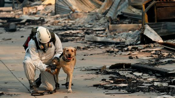 A search and rescue worker tends to his dog while looking for human remains in the Camp Fire.