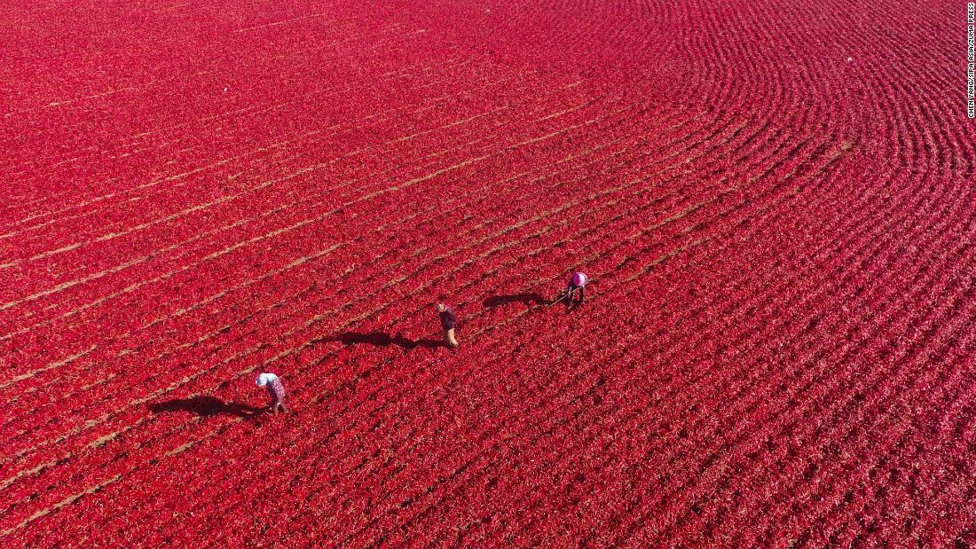 <strong>Xinjiang, China:</strong> Red peppers are aired following the fall harvest in northwest China's Xinjiang Province.