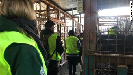 Humane Society International activists inspect the closed slaughterhouse.