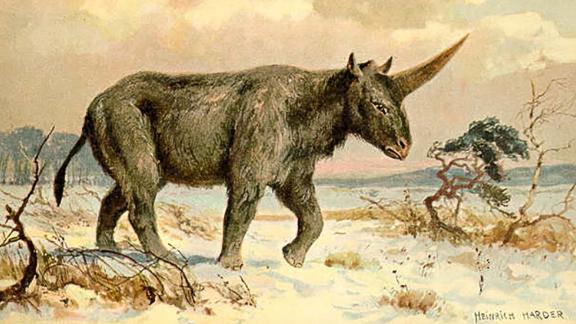 An illustration of the mysterious 3.8-ton Elasmotherium sibiricum by Heinrich Harder, circa 1920.