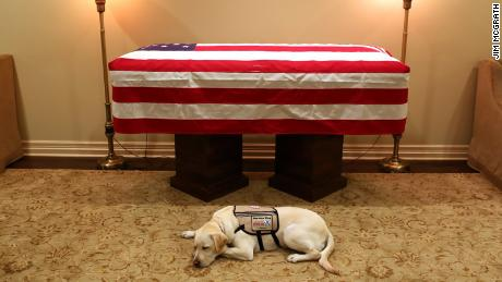 Sully resting in front of President George H.W. Bush's casket in 2018.