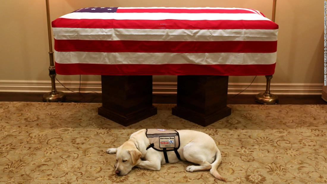 Sully, the service dog of former US President George H.W. Bush, lies in front of Bush's casket at a funeral home in Houston on Monday, December 3. Sully became Bush's service dog this summer, after former first lady Barbara Bush passed away.