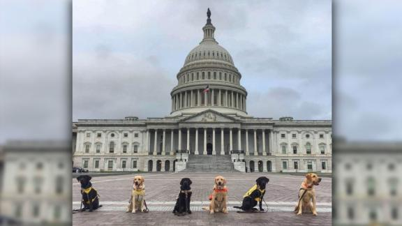 These pups are so smart, they get to host congressional meetings at the US Capitol to advocate funding for service dog programs for disabled vets.