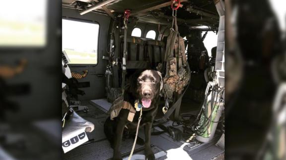 This is Wrigley, he proudly serves the Massachusetts National Guard. He's the Nation's First as a Combat Stress Control Dog. -- What can your dog do?