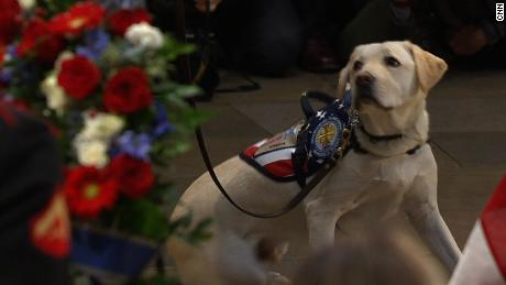 Watch Sully The Dog Say Goodbye One Last Time