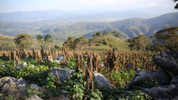 Corn crops, shown, and beans are among the staple foods in the area.